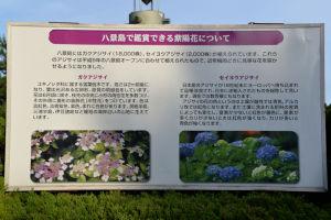 八景島で鑑賞できるアジサイの案内板