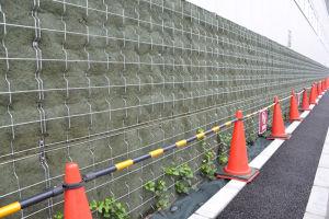 北側の壁には緑化を図るためでしょうか