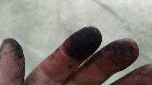 指先が松脂で真っ黒
