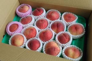 桃とブドウをいただきました