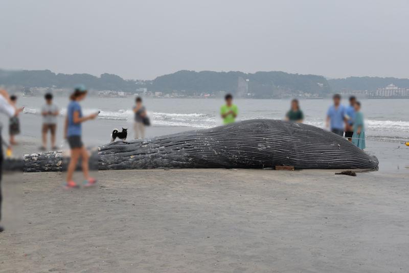鎌倉市の由比ヶ浜海岸・クジラ
