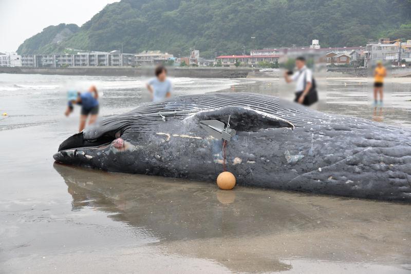 クジラを近くでみるのは初めて