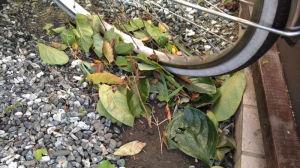 葉っぱやごみがいっぱい