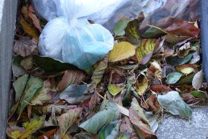 葉が吹き溜まりにたくさん