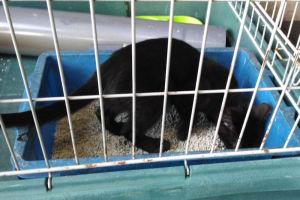 黒い猫は砂場