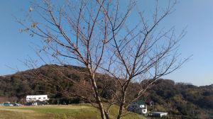 秋色の湘南国際村西公園