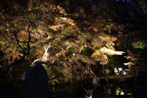 池に映るライトアップされた木々