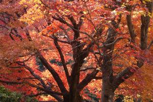2013年12月に京都旅行