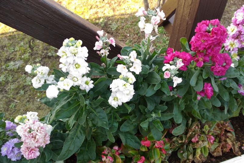 色々な色彩の花が