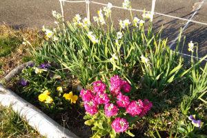 駐車場脇の花壇