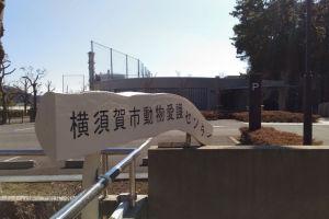 横須賀市動物愛護センター