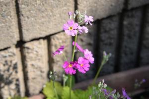 小さな花びらですが