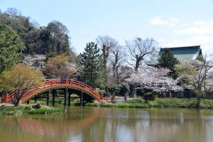 反橋が池にうつりきれいな風景