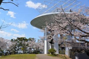 野島公園展望台からの風景と桜
