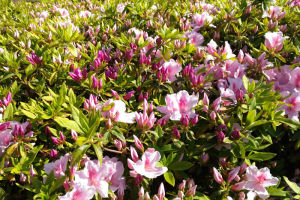 湘南国際村西公園は初夏の陽気
