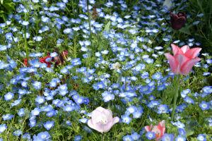 日本大通りの花壇にはたくさんの花が