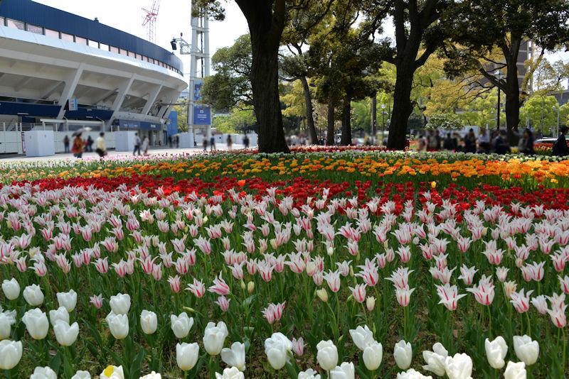 横浜公園のスプリングフェア