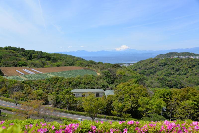 ツツジや畑が写り海と雪が残る富士山