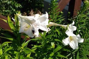 国際村の花