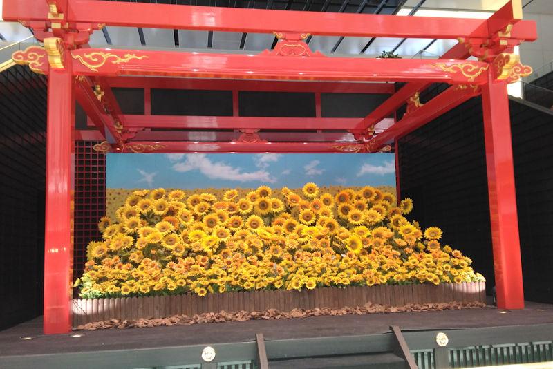 江戸舞台にはヒマワリ畑