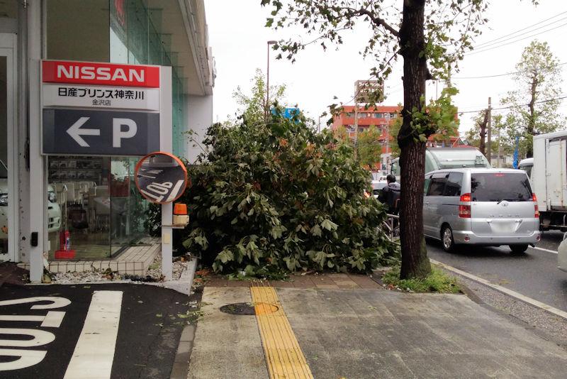 プリンス神奈川金沢店前の街路樹