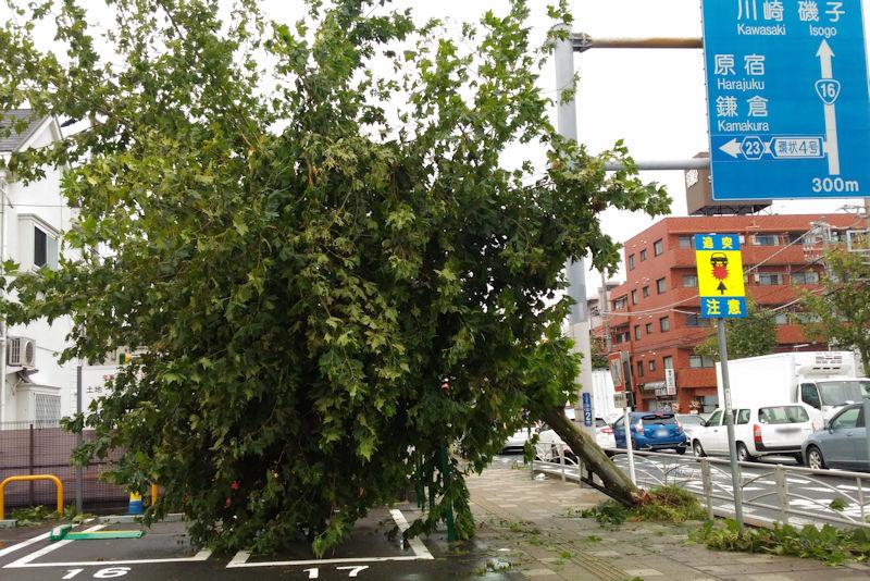 プリンス神奈川金沢店付近の街路樹