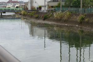 侍従川はゴミとみられる物がたくさん