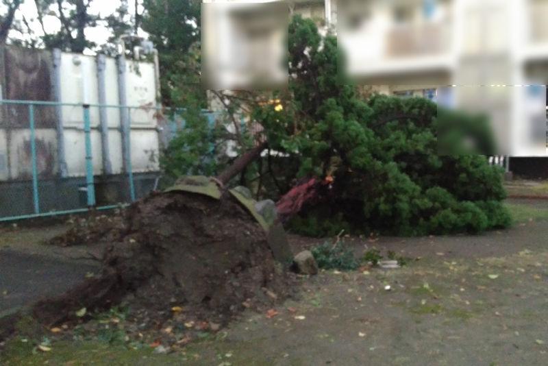 中庭の木も倒れていました