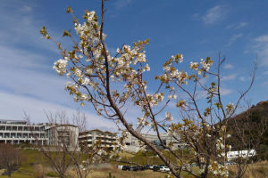 湘南国際村西公園 春の足音