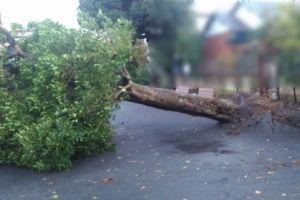 昨年12月2日に突風が吹き公園内の樹木が倒れました