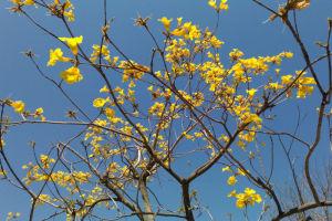 きれいな花を青空のもとに咲かせて