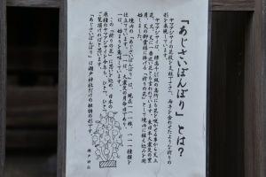 「あじさいぼんぼり」の説明版