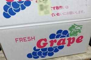 箱にはブドウがたくさん入っていました