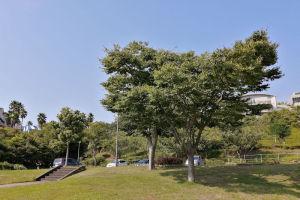 暑い陽射しを遮ってくれた木々