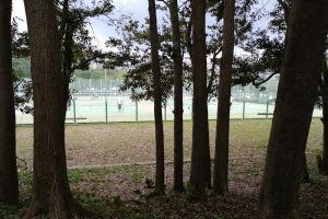湘南国際村西公園 西側の雑木林