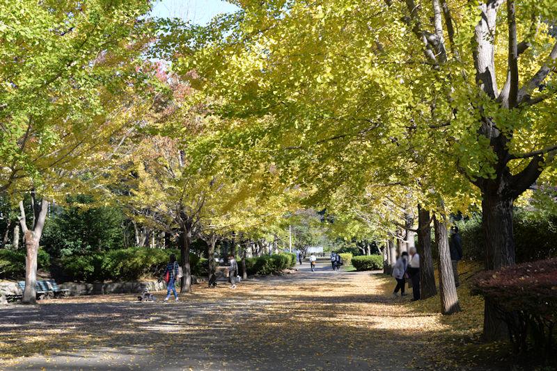 公園には散策を楽しむ人が