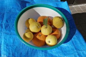 いつもたくさん生る柚子ですが
