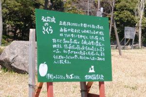 小柴崎緑道に植えられた弘前城のさくら