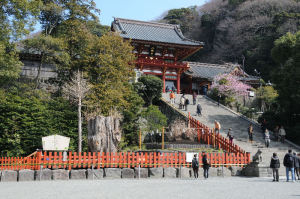 鎌倉鶴岡八幡宮、大銀杏倒木から1年