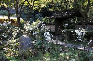 秋の鎌倉・瑞泉寺