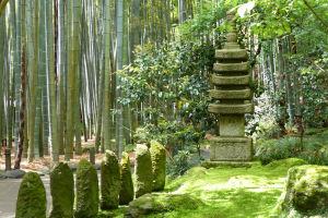 竹の庭鎌倉報国寺と八幡宮銀杏