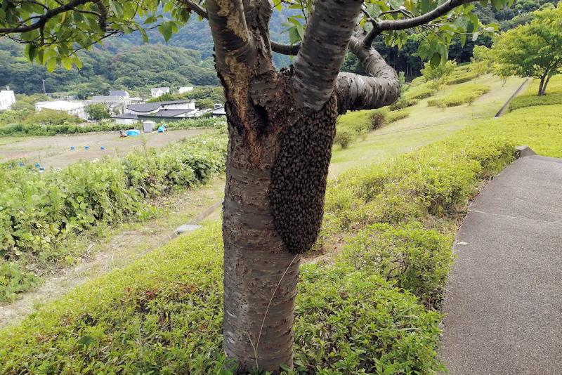 塊の周りにハチが飛んでいました