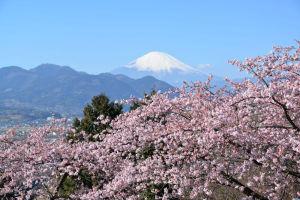 神奈川県 県のたより投稿写真