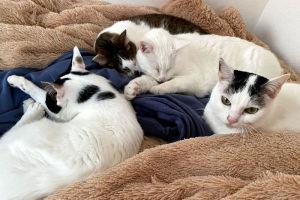 2月22日 今日は「猫の日」