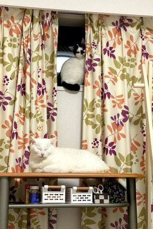 最初の4匹は東京の親戚の猫さん