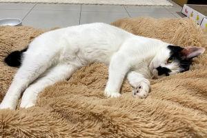 毛足の長いマットに寝て