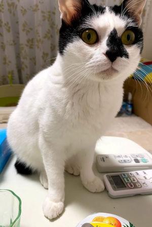 鼻の上に特徴ある猫さん