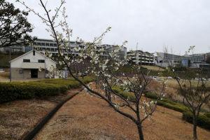 西公園の山桜も咲き始めて