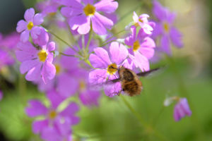 ミツバチが来ていました