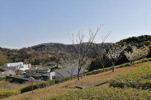 山桜がたくさん咲いて山々が白く